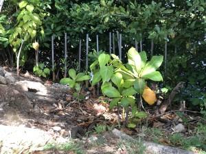 Condado Lagoon Planting S2.